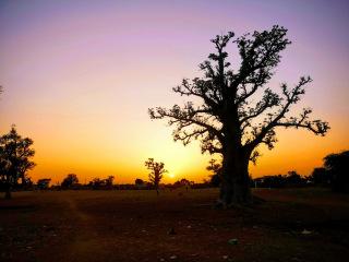 Baobab de Louly Benteigné