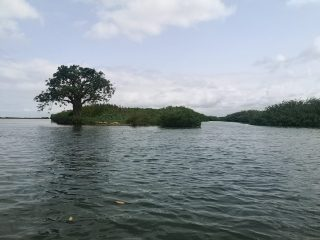 El baobab solitario en el Sini Saloum